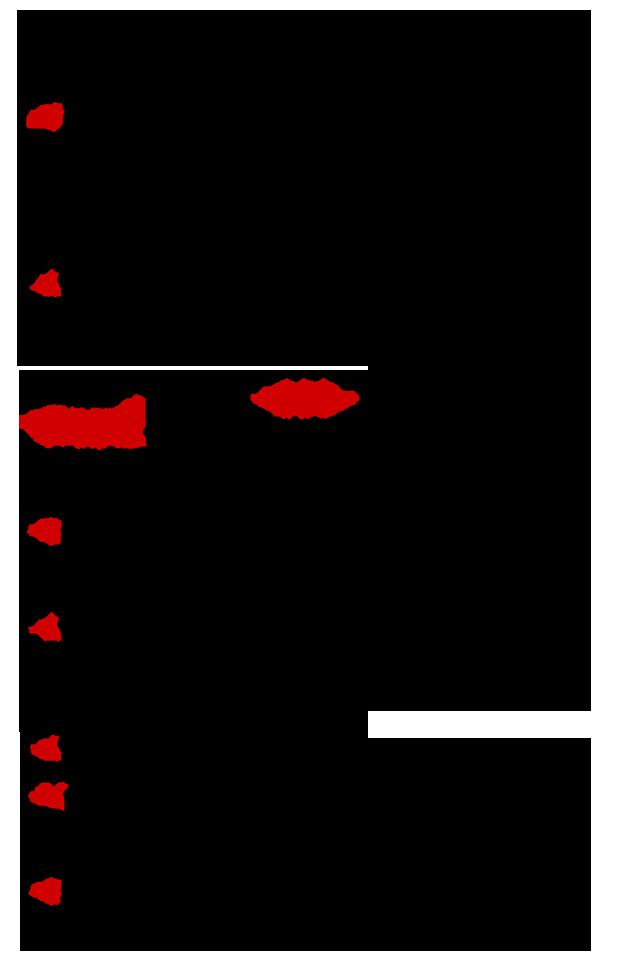 Sygnomi-Eyharisto-3