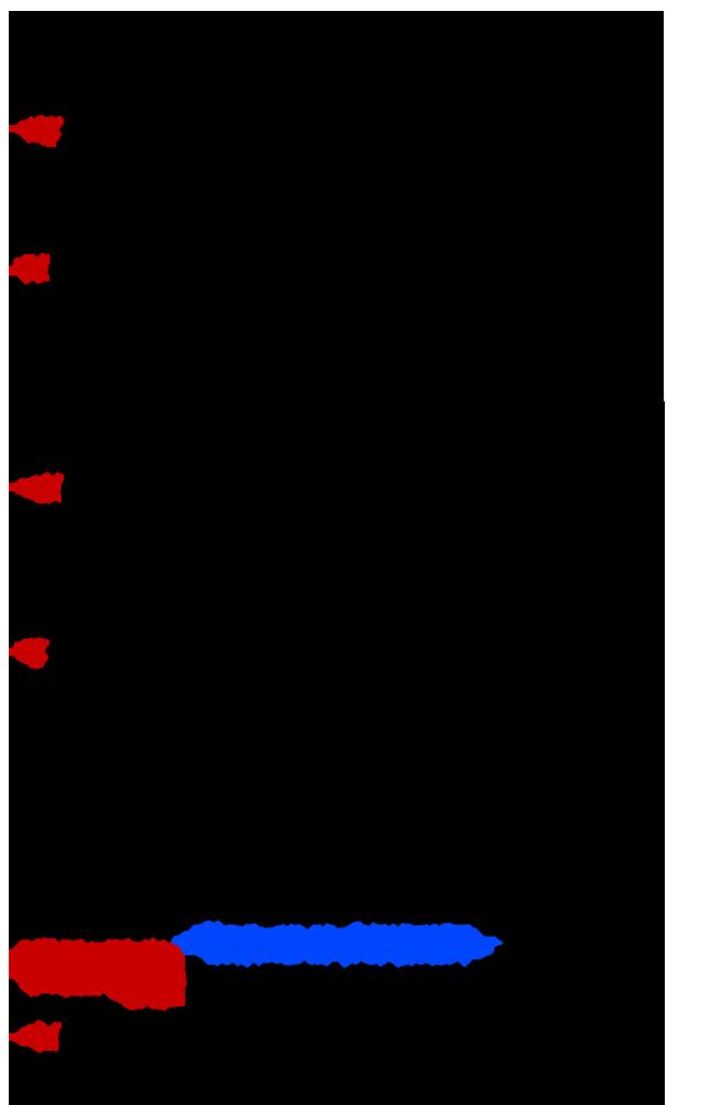 PapaStratis-3